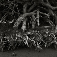 River Roots1