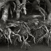 River Roots3