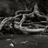 River Roots 7