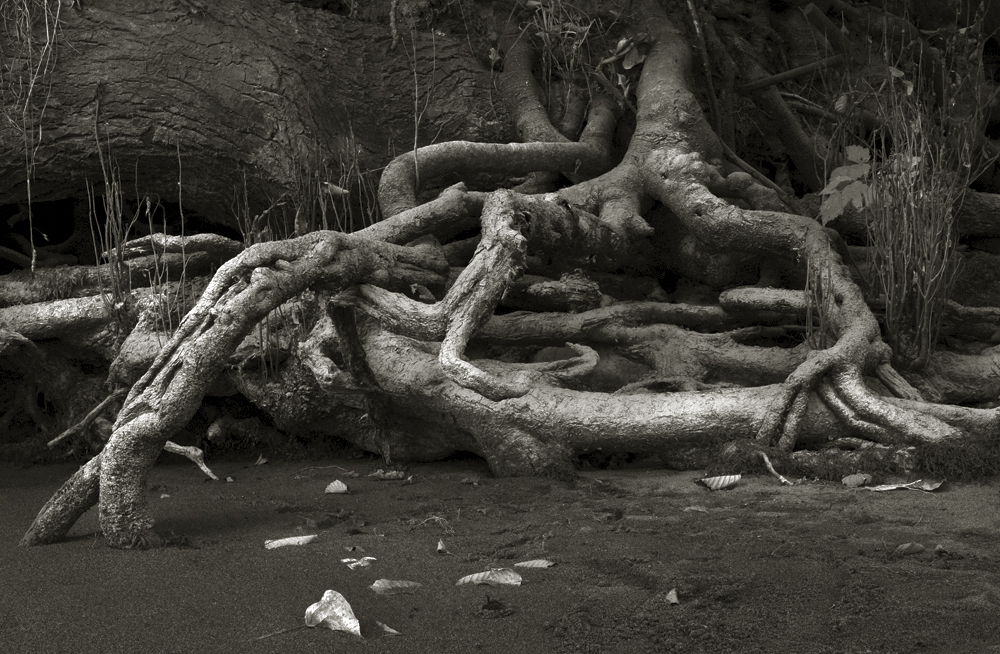 River Roots7
