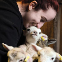 Maplewood farm Lambing season -photos Mike Mar 15 16Maplewood farmer Janeen  Horne cuddles up fort the first time with 2 day old triplets as the lambing season is under way on the farm - Community